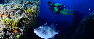 Scuba Diving after a trigger fish
